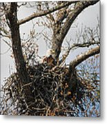 Eagles Watchful Eye 2 Metal Print