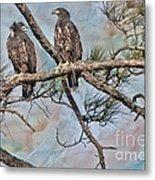 Eaglets In Oil Metal Print