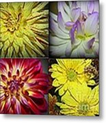 Early Autumn Blossoms Metal Print