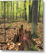 Early Autumn Woods Metal Print