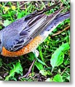 Early Bird Catches The Worm Metal Print