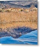 Early Bird Gets The Worm Metal Print by Cat Connor