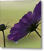 Early Dawns Light On Fall Flowers 01 Metal Print