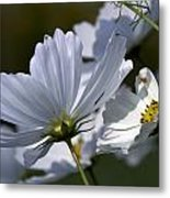 Early Dawns Light On Fall Flowers 02 Metal Print