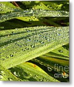 Early Dew Metal Print