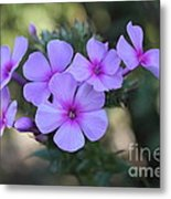 Early Morning Floral Beauty  Metal Print