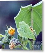 Early Morning Frost Metal Print