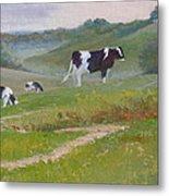 Early Morning Holsteins Metal Print