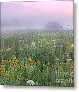 Early Morning Meadow Metal Print