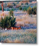 Early Morning Prowler Metal Print