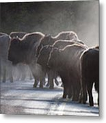 Early Morning Road Bison Metal Print