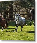Early Morning Romp Metal Print