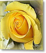 Early Morning Rose Metal Print