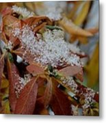 Early Snow On Rhododendron Metal Print