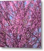 Early Spring Flowering Redbud Tree Metal Print