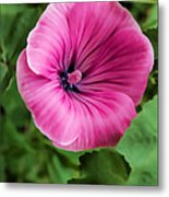Early Summer Blooms Impressions - Bright Pink Malva - Vertical View Metal Print