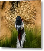 East African Crowned Crane Square Format Metal Print