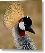 East African Crowned Crane Metal Print