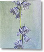 Easter Hyacinth Metal Print