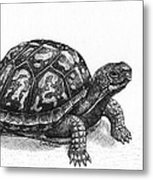 Eastern Box Turtle Metal Print