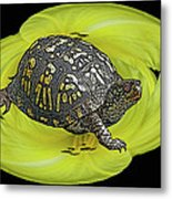 Eastern Box Turtle On Yellow Lily Metal Print