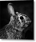 Eastern Cottontail Rabbit Portrait Metal Print by Rebecca Sherman