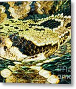 Eastern Diamondback Rattlesnake Metal Print