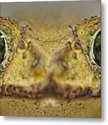 Eastern Giant Toad Metal Print