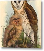 Eastern Grass Owl Metal Print