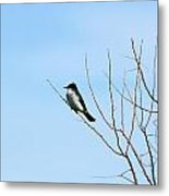 Eastern Kingbird In A Tree Metal Print