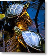 Eastern Painted Turtles Metal Print