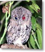 Eastern Screech Owl 2 Metal Print