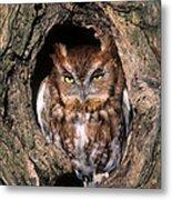 Eastern Screech Owl - Fs000810 Metal Print