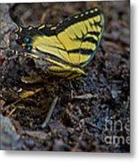 Eastern Swallowtail Metal Print