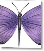 Eastern Tailed Blue Butterfly Metal Print by Anonymous