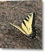 Eastern Tiger Swallowtail 8564 3241 Metal Print
