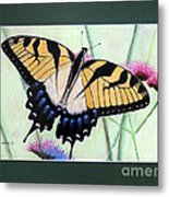 Eastern Tiger Swallowtail Butterfly By George Wood Metal Print