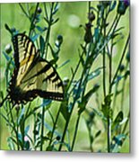Eastern Tiger Swallowtail Ins 76 Metal Print
