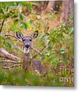 Eastern Whitetail Deer Metal Print