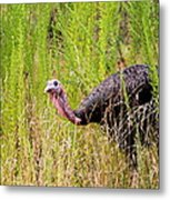 Eastern Wild Turkey - Longbeard Metal Print