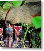 Eat Up Metal Print by Frozen in Time Fine Art Photography