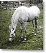 Eating After The Bath Metal Print