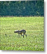 Eating Cranes Metal Print