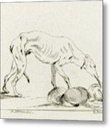 Eating Dog, D. Merrem Metal Print