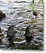 Eating Ducks Metal Print