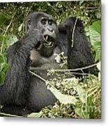 Eating Mountain Gorilla Metal Print