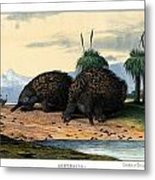 Echidna Or Porcupine Anteater Metal Print