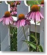 Echinacea And A White Picket Fence Metal Print