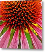 Echinacea Flower Upclose Filtered Metal Print