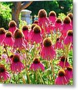 Echinacea Flowers Metal Print